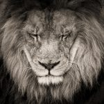 The wise king